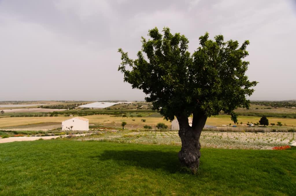 sicilia 291(1)